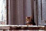 gatto su davanzale.jpg