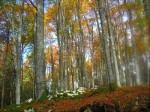 Foresta del Cansiglio.jpg