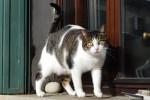 gatto-venezia.JPG